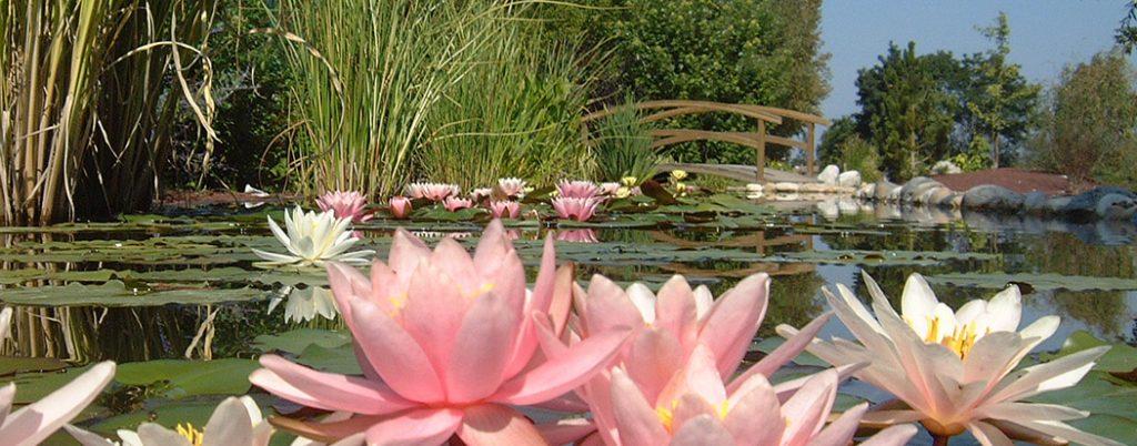 Insolites et exotiques les jardins aquatiques un - Les jardins aquatiques saint didier sur chalaronne ...